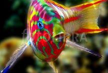 Strange & Beautiful Creatures