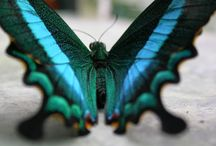 Butterflies, Dragonflies, Insects
