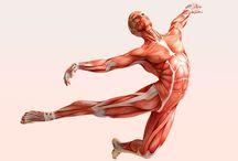 Фасциальная гимнастика