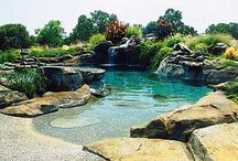 Havuz & gölet