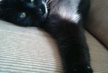 Love Grietje, my beautiful black cat!