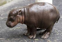 Cute Animals / by Susan Melton