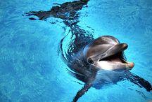 Kedvenc..állataim...pl..okos és  aranyos delfin--