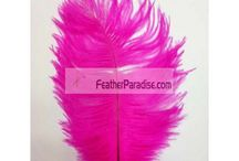 Fuchsia/Magenta / by Feather Paradise