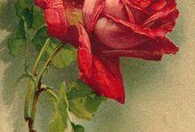 print kwiaty i motyle