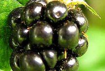 Fruit Nuts & Berries / by Erika Moore