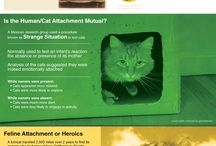 Pets & Animals Infographics / Infographics and data visualizations that focus on the topic of pets and animals.