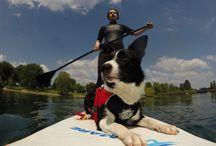 Der Sonne entgegen... / SUP / StandUp Paddling mit deinem Hund! Ein riesen Spaß im Sommer.