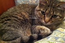 Cat Obsession / We love cats - but especially love cats whose litter box odor goes without notice!