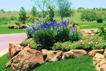 Yard of the month! / Landscaping ideas for Texas / by Lezlie Swink