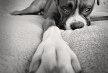 Beautiful Pet Portraits