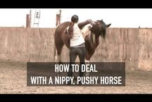 Education chevaux
