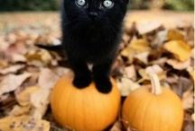 :::Halloween Cats & Dogs::: / Welcome to the Halloween Cats & Dogs Group Board! This board is for cute and funny cat & dog photos only, unrelated pins will be removed. If you would like to join, Pinterest asks you to follow Woof Wednesday. We will send invites to our followers regularly...have fun!