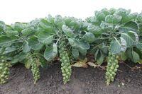 Uprawa warzyw / Porady, zdjęcia - wszystko o uprawie warzyw.