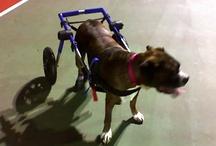 Handicapped Pets