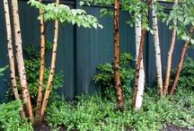 Backyard cloture