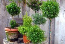 Topiary Wonders