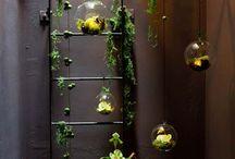 Jardin d'intérieur / Green home