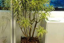 plantas para melhorar a saude de sua casa