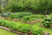 jardines - huerta