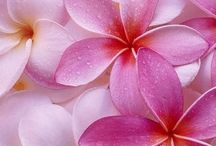 мирочки цветочки