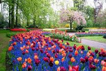 Fák.virágok.bokrok,kertek