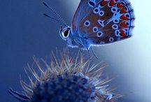 Butterfly & insect prints / бабочки и насекомые в рисунке