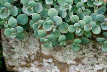 Succulents / by Desert Gal Treasures