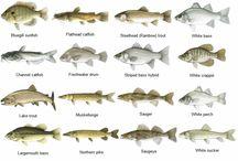 vis soorte