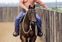 entrenamiento caballos