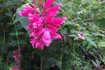 Margot's flowers
