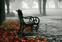 Bench / Le panchine: assi di legno assemblate con maestria, sono mondi all'interno di un universo.  Silenziose offrono alle anime  conforto, supporto o appoggio. Quante vite passano; una madre col bimbo in carrozzella, anziani che riposano le stanche membra, giovani che si incontrano e amori che sbocciano.  Che miracoli sono le panchine. Seminate ad arte, silenziose testimoni  delle nostre vite.