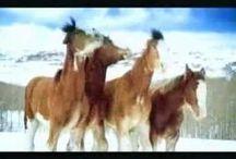 Horsey Mania / Tiny tidbits of horses that we enjoy.