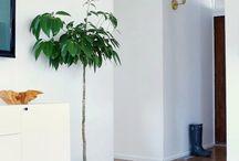 Indoor Greenery