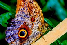 Motýli / hmyz
