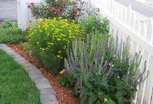Outdoor landscaping ideas / Outdoor flowers