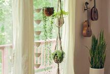 Home : Indoor Plants