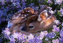 :Животный мир