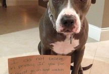 I Love Pit Bulls! / by The A7XES