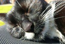 Plaatsen om te bezoeken / cat chilling