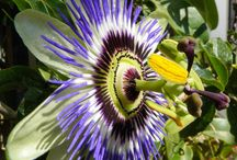 Podivuhodné rostliny
