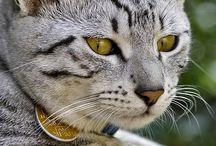 catty sweet