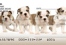English Bulldog / Funny bulldog pics and gift merchandise for Bulldog lovers. Visit www.bulldogpersonalchecks.com for English Bulldog Personal Checks, Apparel, Home Decor, and Gift Merchandise.