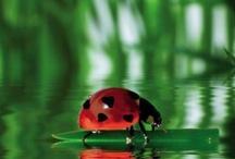 LIENKY-ladybird