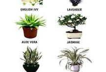 House / bedroom Plants