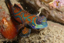 Inspiration in Nature - Sealife