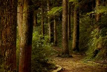 ~ a path to ~
