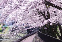 (•ॢ◡-ॢ) Beautiful Japan