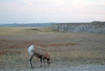 South Dakota State / Photos and blogs from my trip to South Dakota