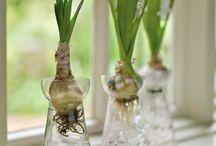 great outdoor ideas / by Cindy Gomola Yanni